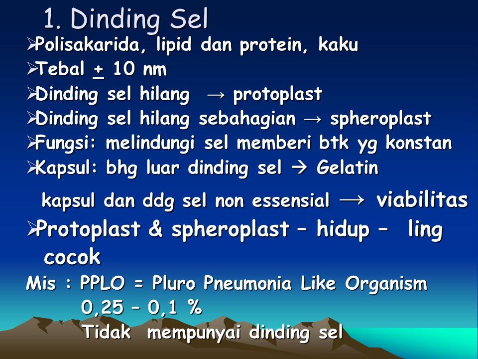 1. Dinding Sel Protoplast & spheroplast – hidup – ling cocok