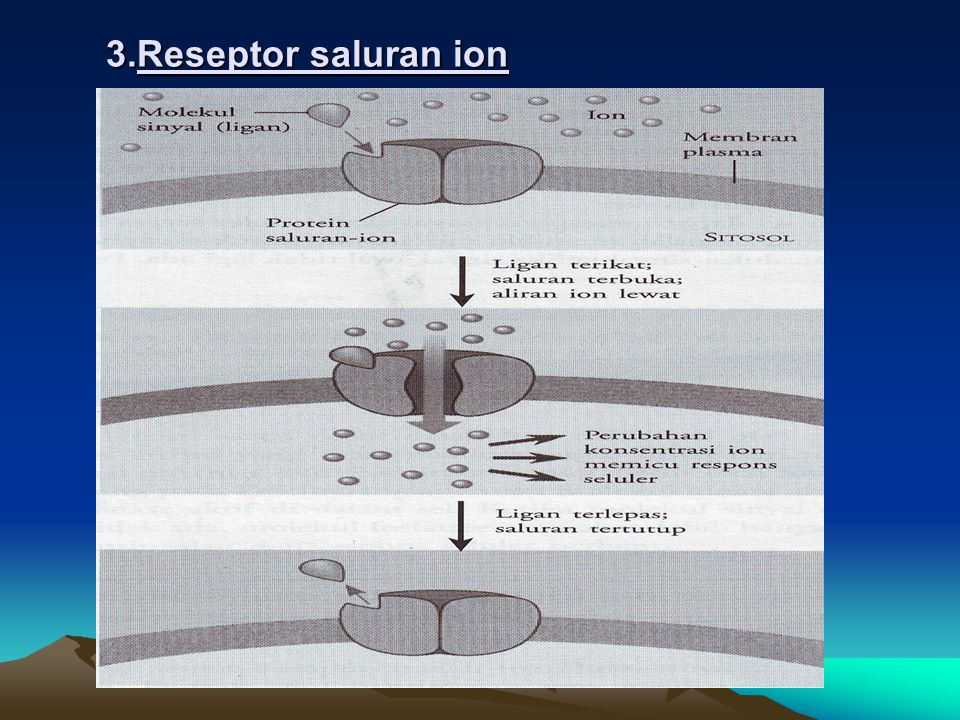 3.Reseptor saluran ion