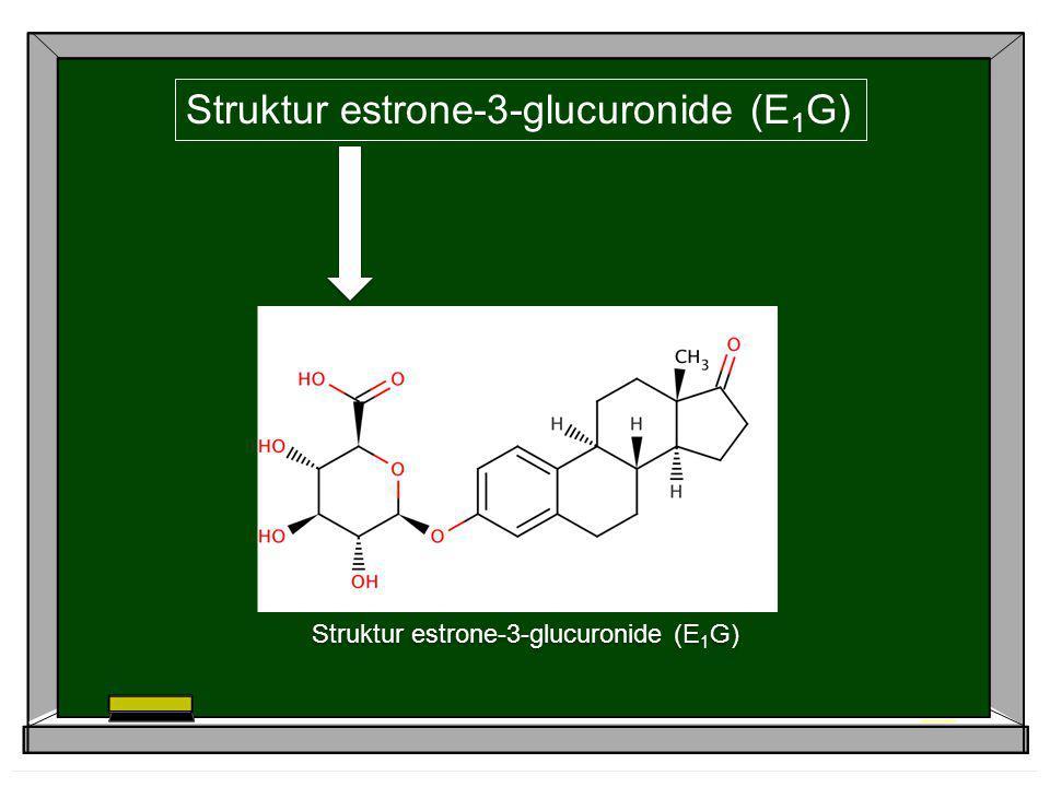 Struktur estrone-3-glucuronide (E1G)