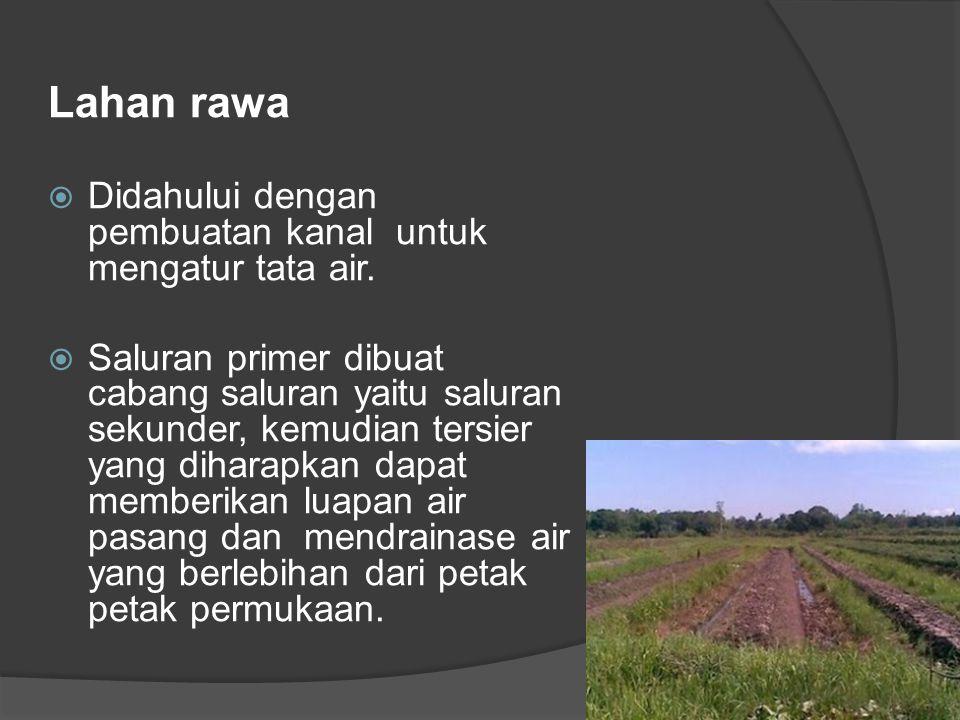 Lahan rawa Didahului dengan pembuatan kanal untuk mengatur tata air.