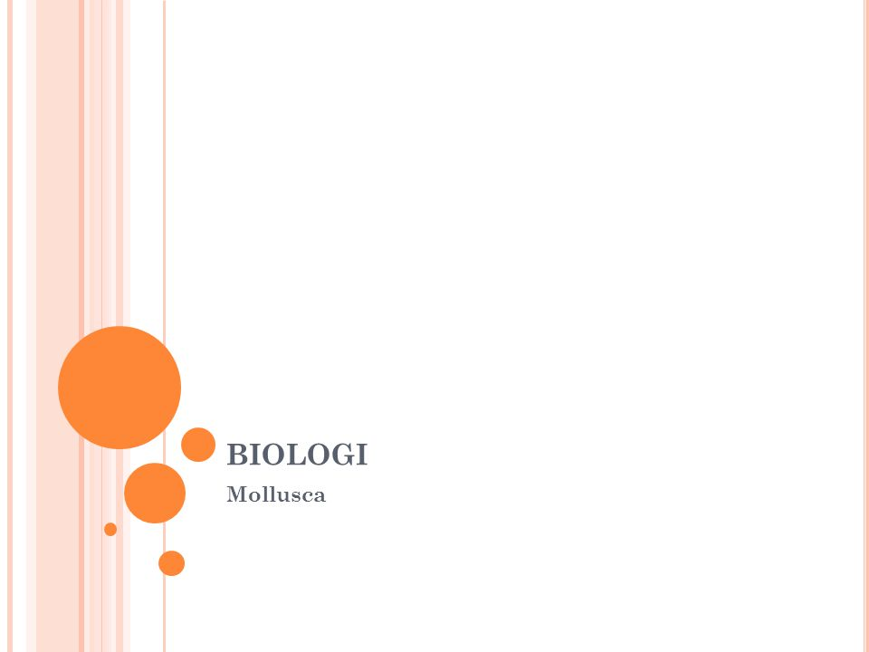 biologi Mollusca
