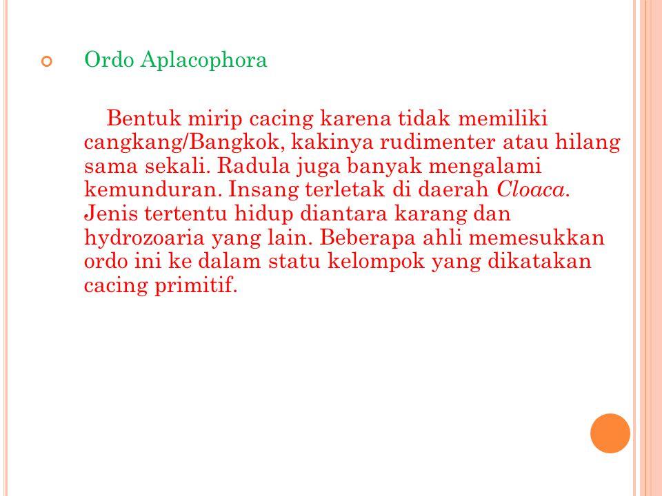 Ordo Aplacophora