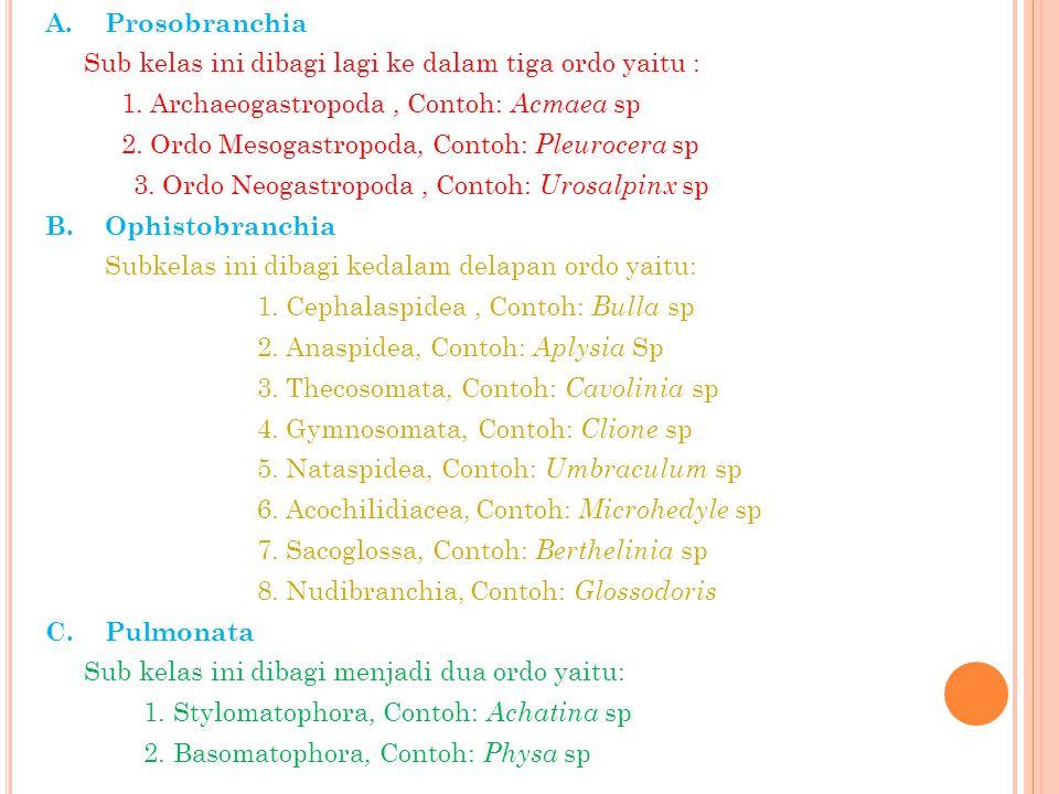 A. Prosobranchia Sub kelas ini dibagi lagi ke dalam tiga ordo yaitu : 1.