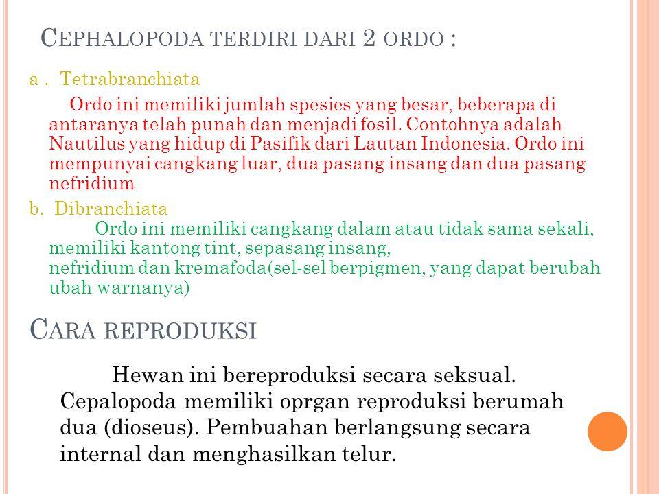 Cephalopoda terdiri dari 2 ordo :