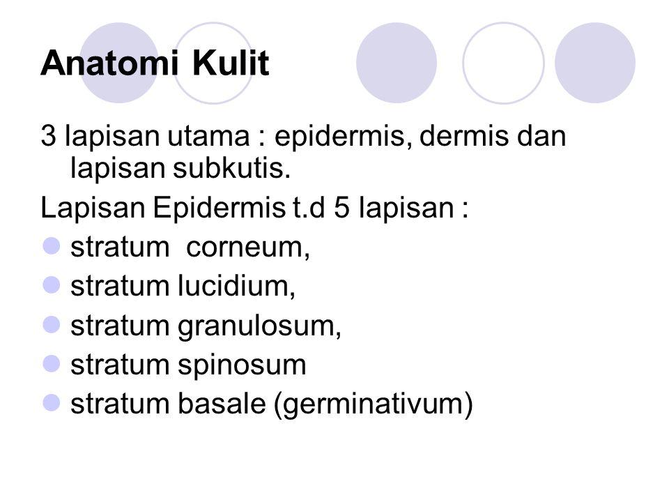 Anatomi Kulit 3 lapisan utama : epidermis, dermis dan lapisan subkutis. Lapisan Epidermis t.d 5 lapisan :