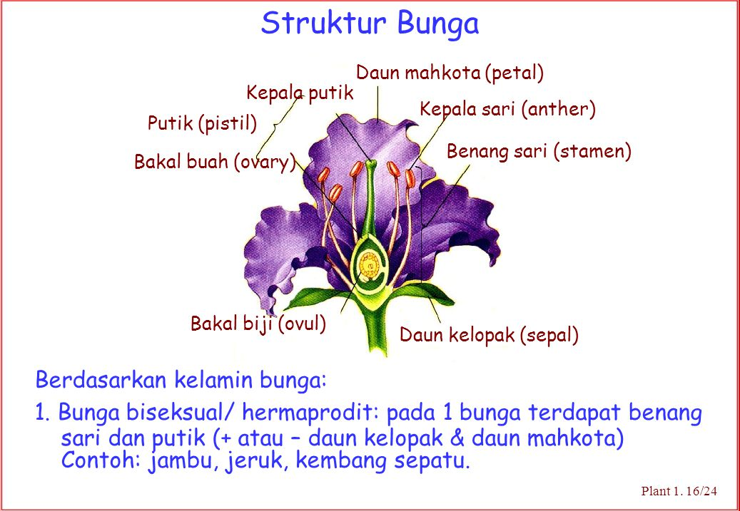 Struktur Bunga Berdasarkan kelamin bunga:
