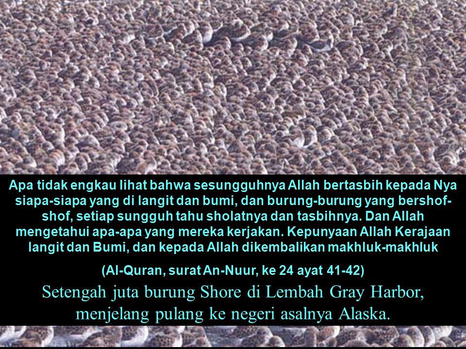 (Al-Quran, surat An-Nuur, ke 24 ayat 41-42)