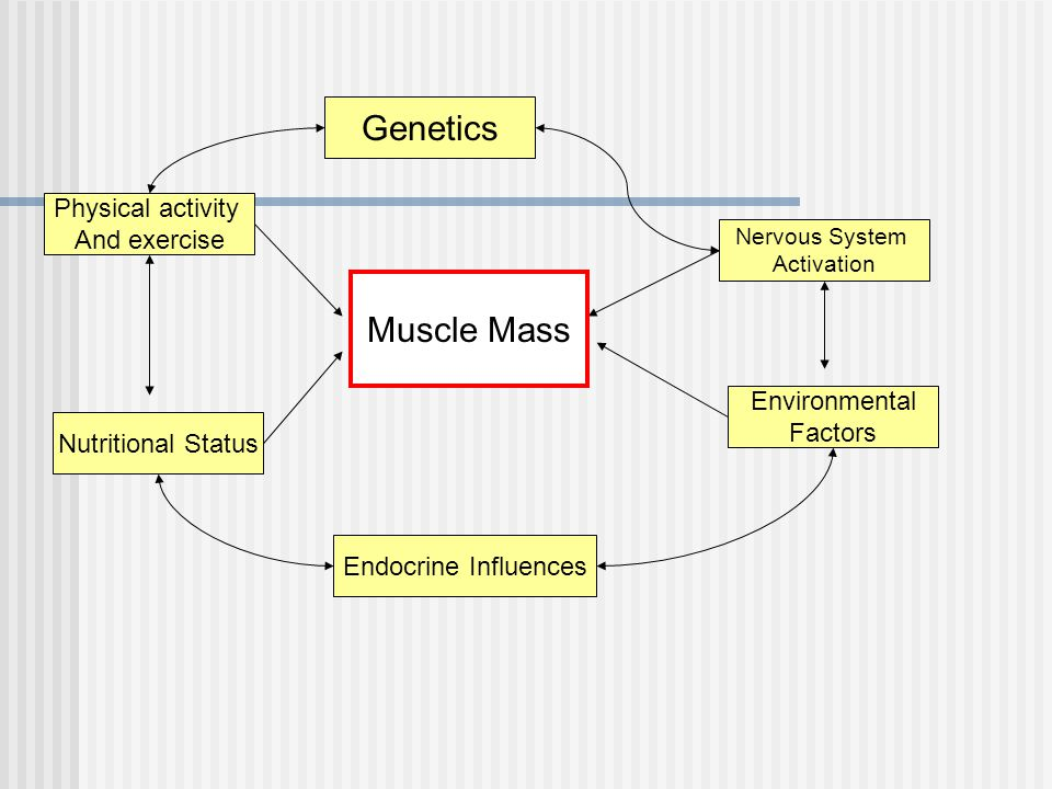 Genetics Muscle Mass Physical activity And exercise Environmental