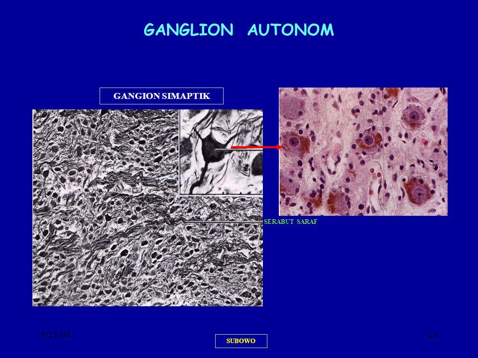 GANGLION AUTONOM GANGION SIMAPTIK SERABUT SARAF 8/21/04 SUBOWO