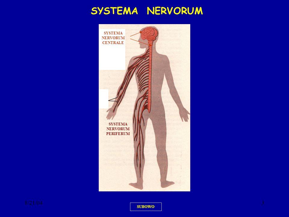 SYSTEMA NERVORUM CENTRALE SYSTEMA NERVORUM PERIFERUM