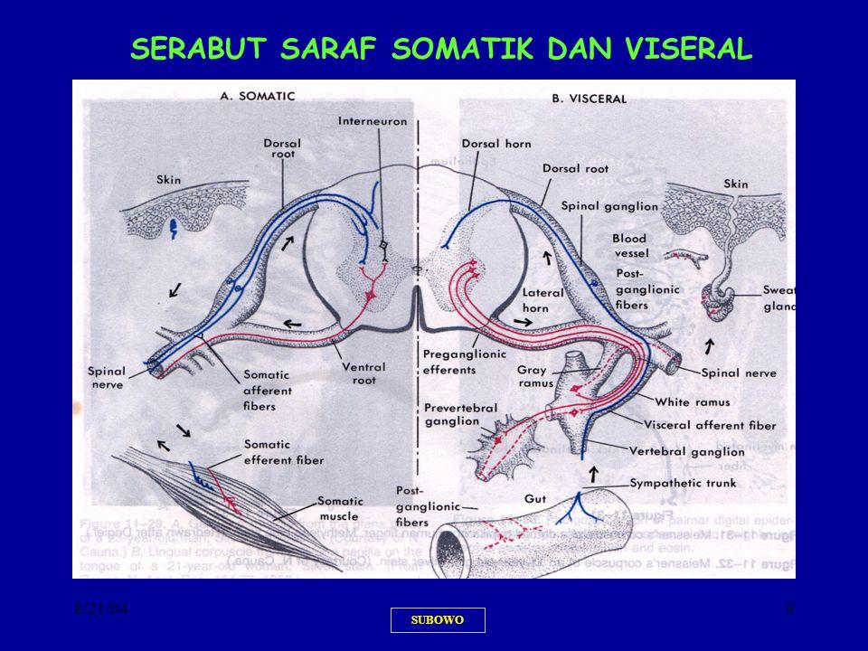 SERABUT SARAF SOMATIK DAN VISERAL