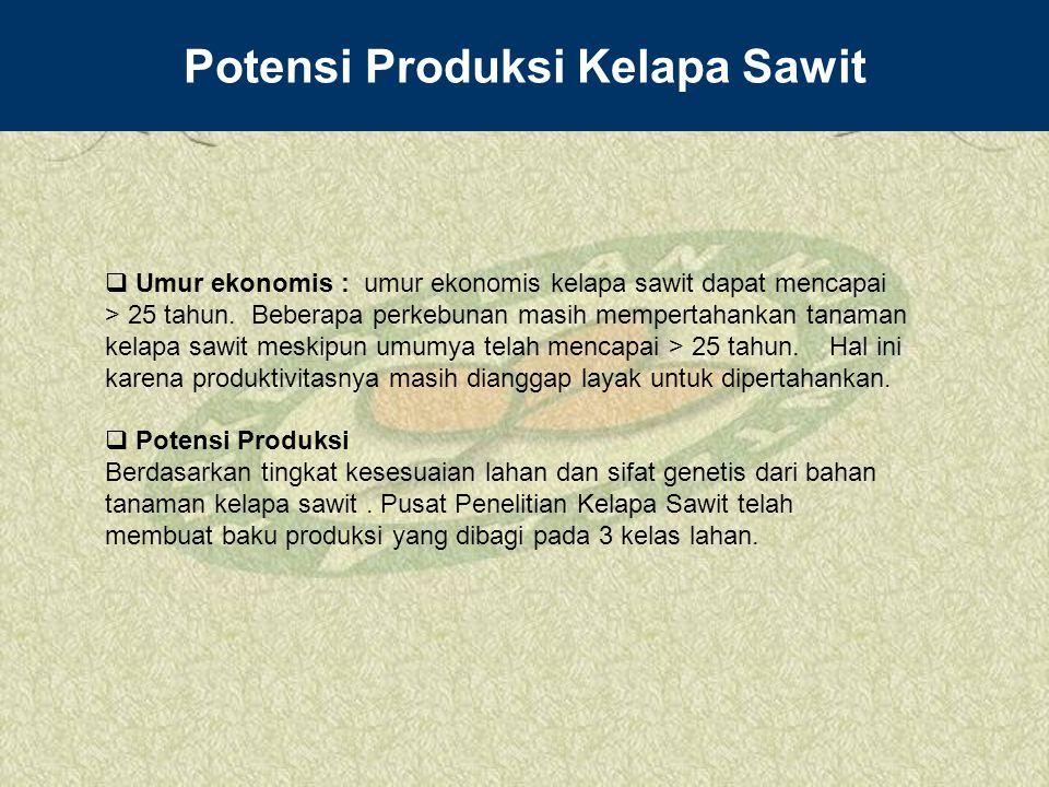 Potensi Produksi Kelapa Sawit