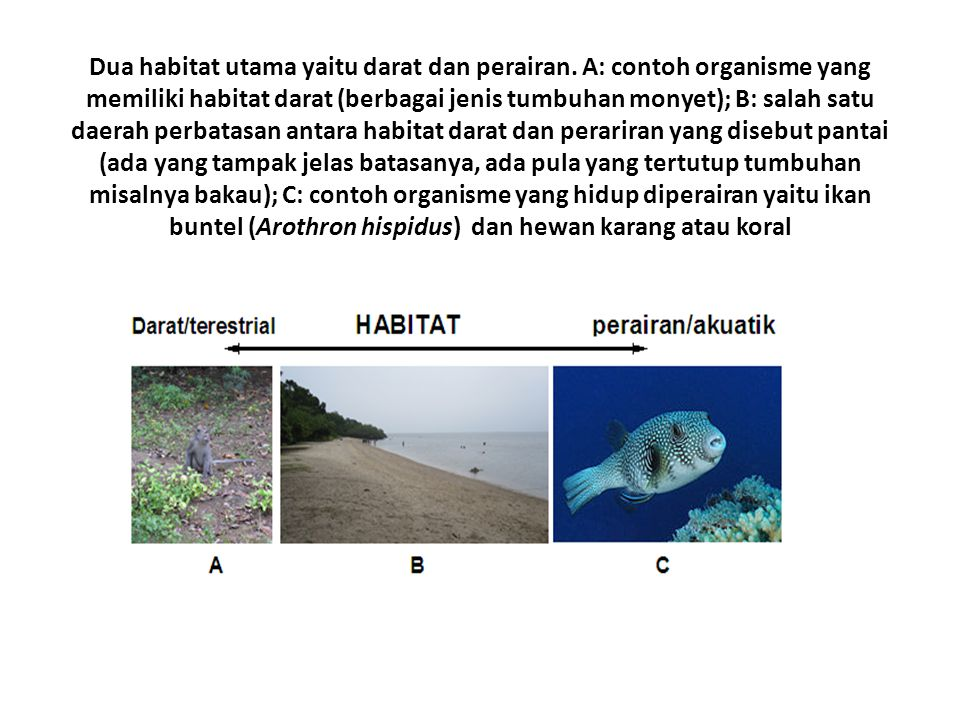 Dua habitat utama yaitu darat dan perairan