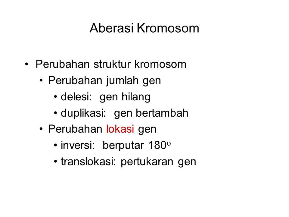 Aberasi Kromosom Perubahan struktur kromosom Perubahan jumlah gen
