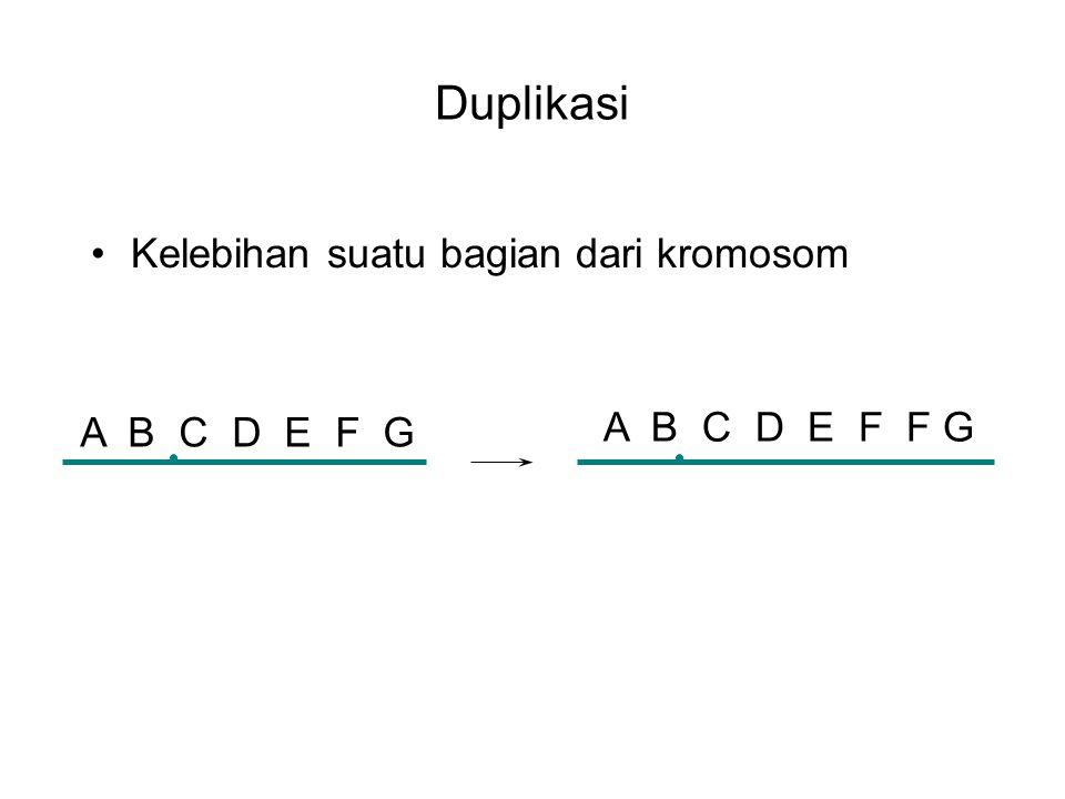 Duplikasi Kelebihan suatu bagian dari kromosom A B C D E F F G