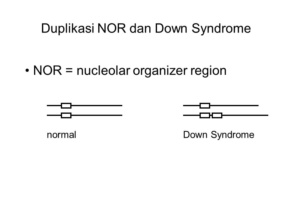 Duplikasi NOR dan Down Syndrome
