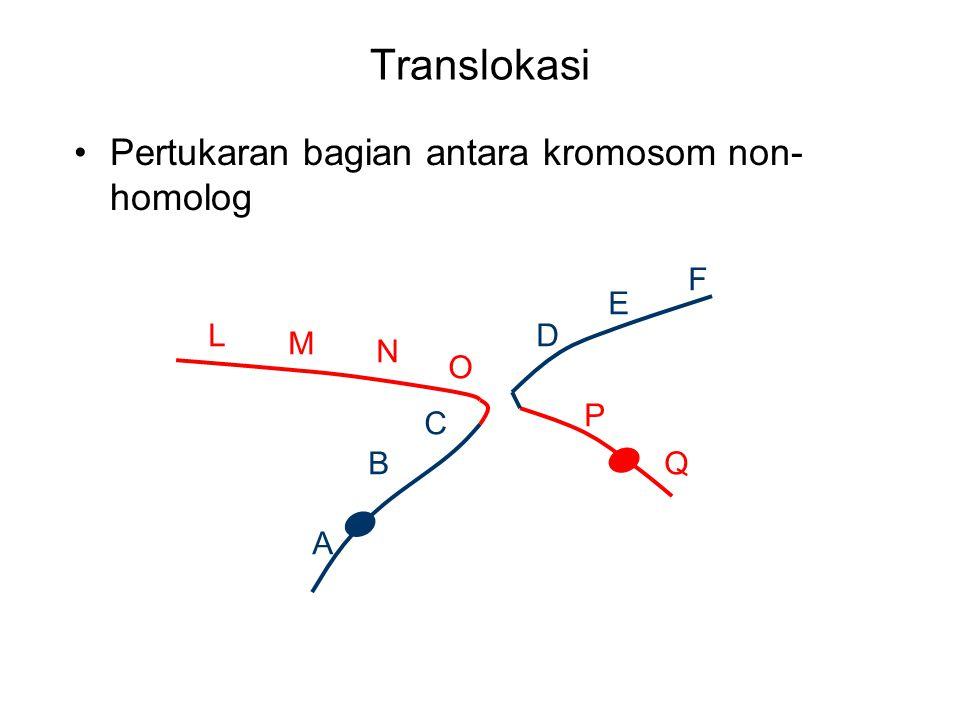 Translokasi Pertukaran bagian antara kromosom non-homolog F E L D M N