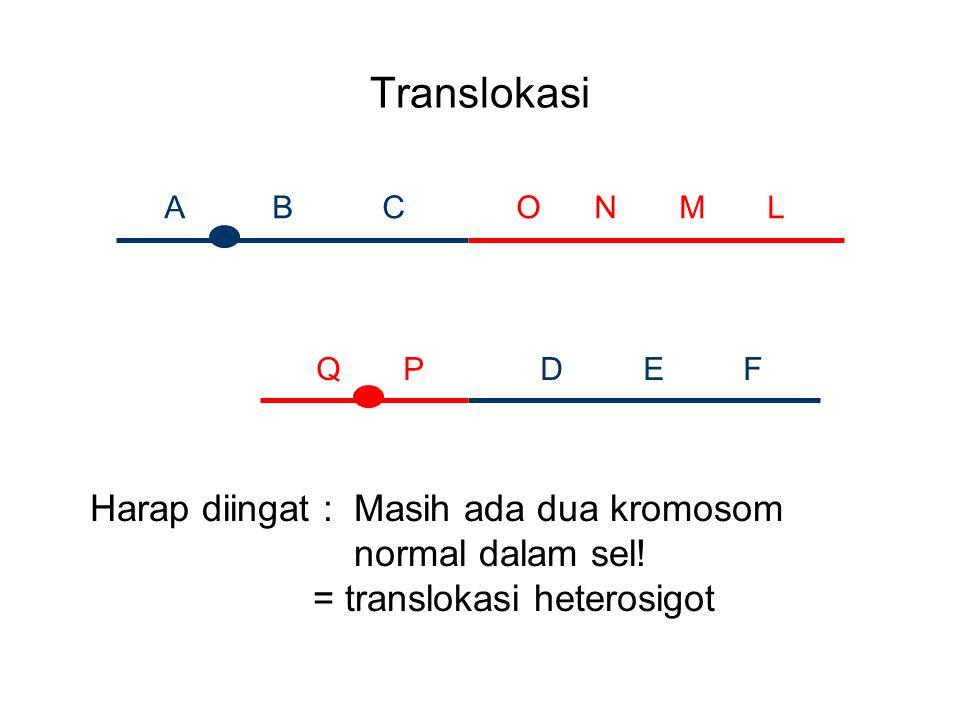 Translokasi Harap diingat : Masih ada dua kromosom normal dalam sel!