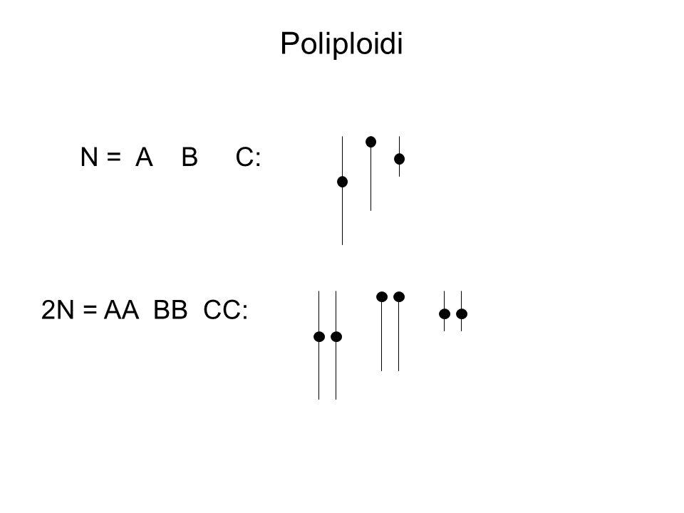 Poliploidi N = A B C: 2N = AA BB CC: