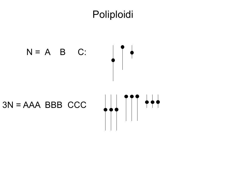 Poliploidi N = A B C: 3N = AAA BBB CCC