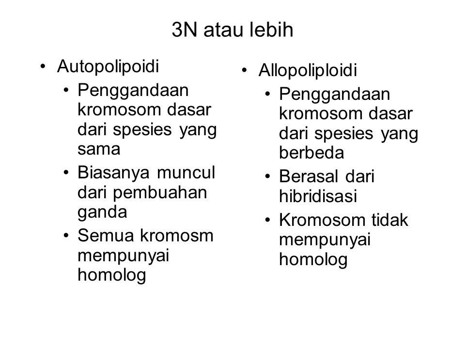 3N atau lebih Autopolipoidi Allopoliploidi