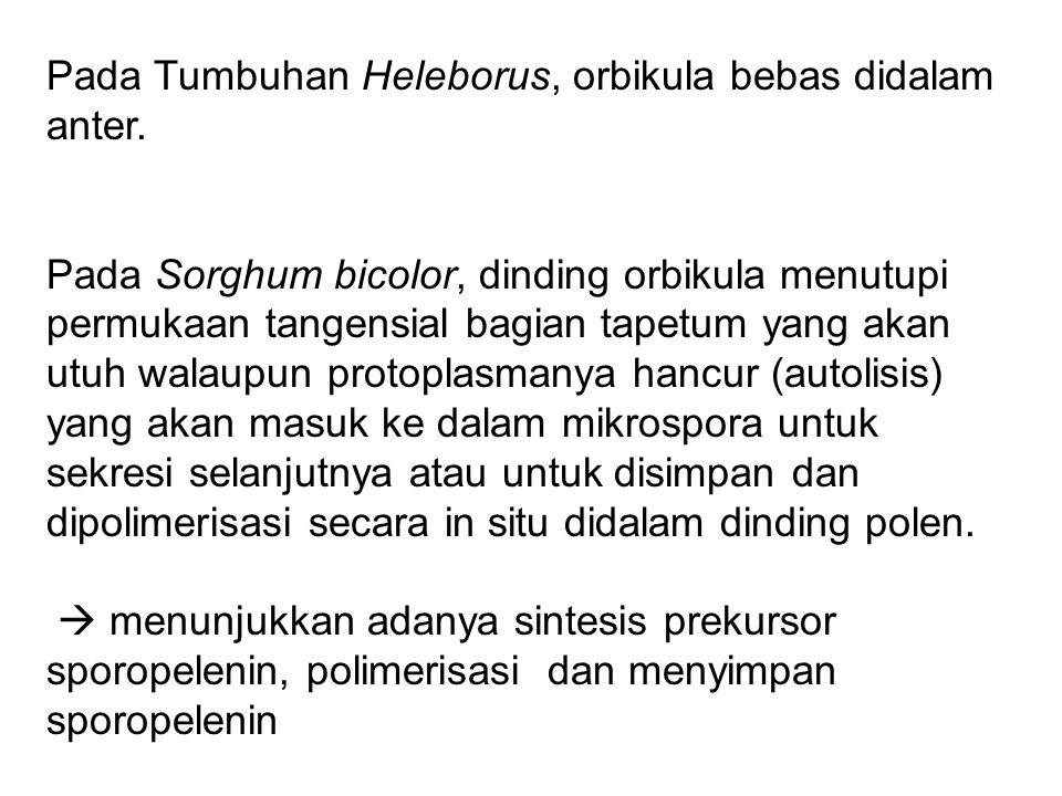 Pada Tumbuhan Heleborus, orbikula bebas didalam anter.