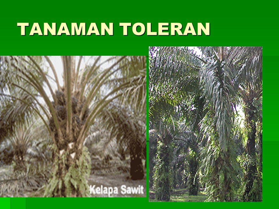 TANAMAN TOLERAN