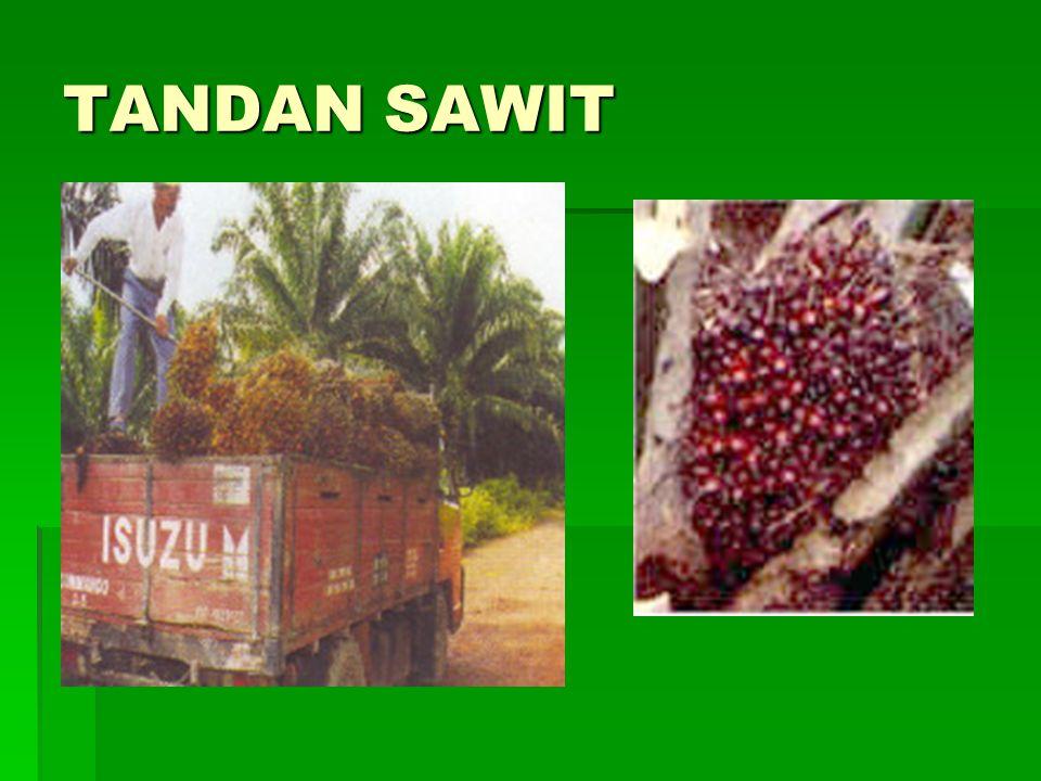 TANDAN SAWIT