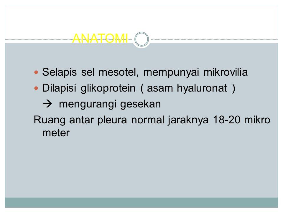 ANATOMI Selapis sel mesotel, mempunyai mikrovilia