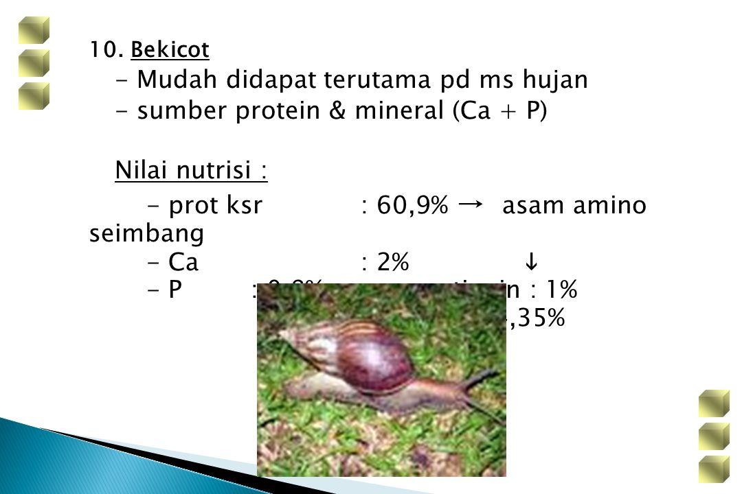 10. Bekicot - Mudah didapat terutama pd ms hujan. - sumber protein & mineral (Ca + P) Nilai nutrisi :