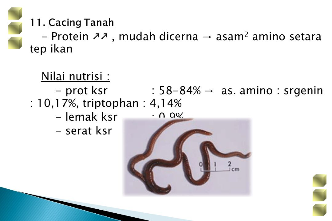 11. Cacing Tanah - Protein kk , mudah dicerna → asam2 amino setara tep ikan. Nilai nutrisi :