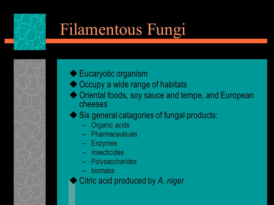 Filamentous Fungi Eucaryotic organism Occupy a wide range of habitats