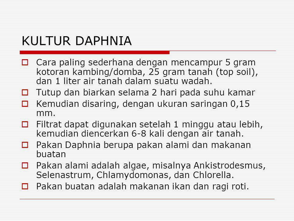 KULTUR DAPHNIA