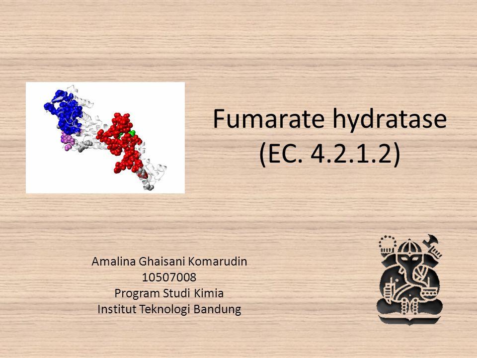 Fumarate hydratase (EC. 4.2.1.2)