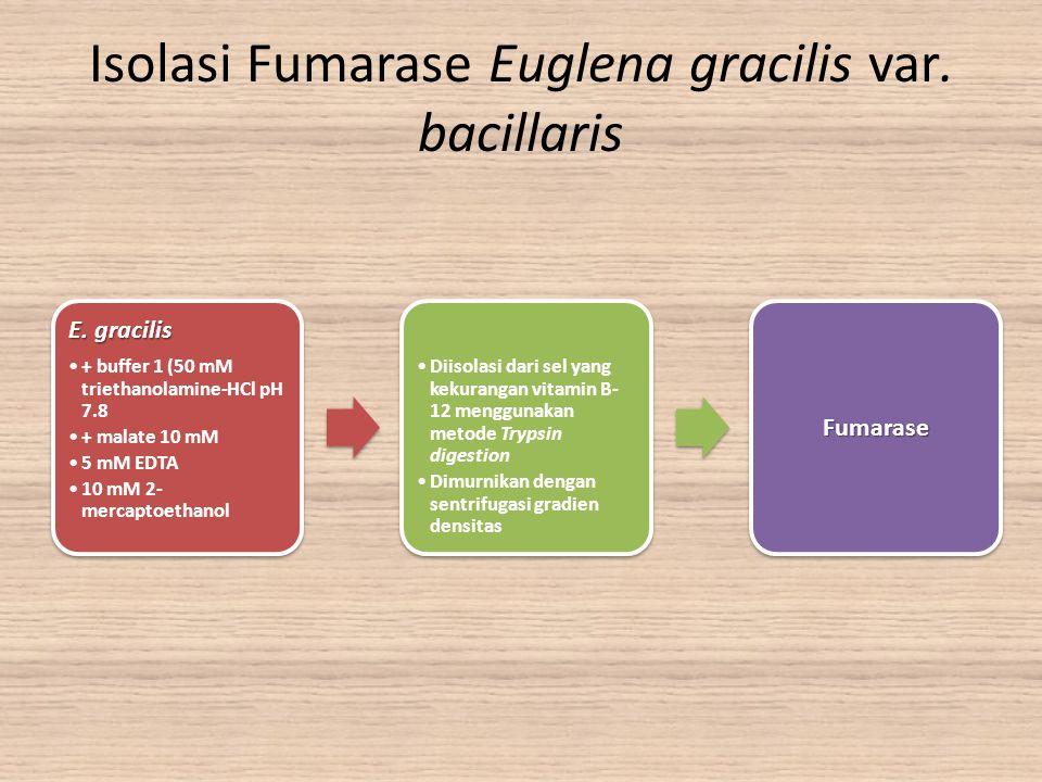 Isolasi Fumarase Euglena gracilis var. bacillaris