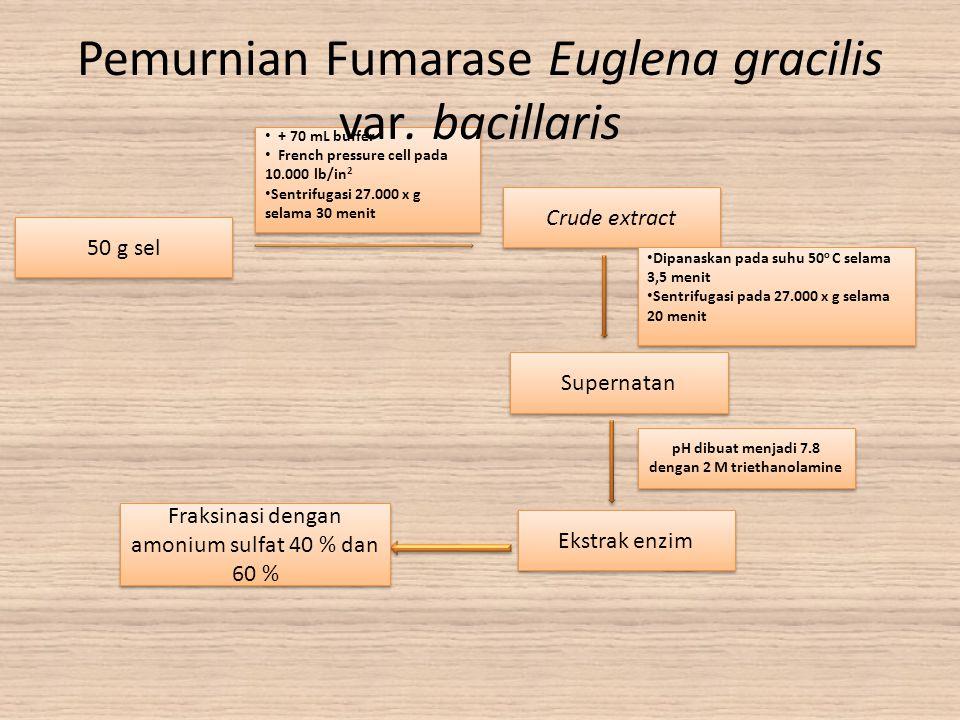 Pemurnian Fumarase Euglena gracilis var. bacillaris
