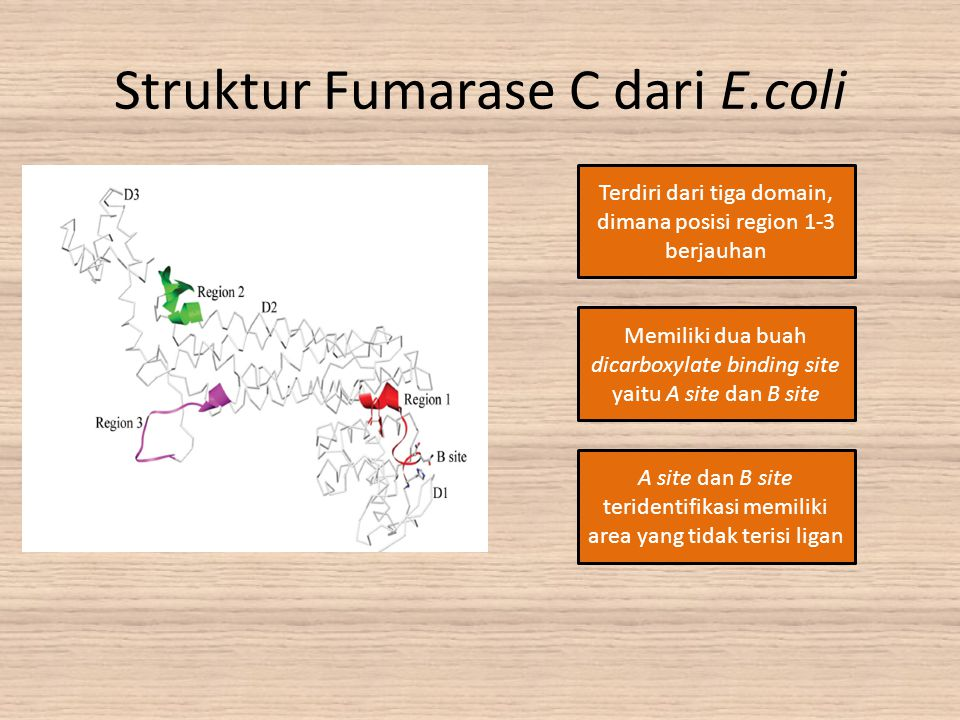 Struktur Fumarase C dari E.coli