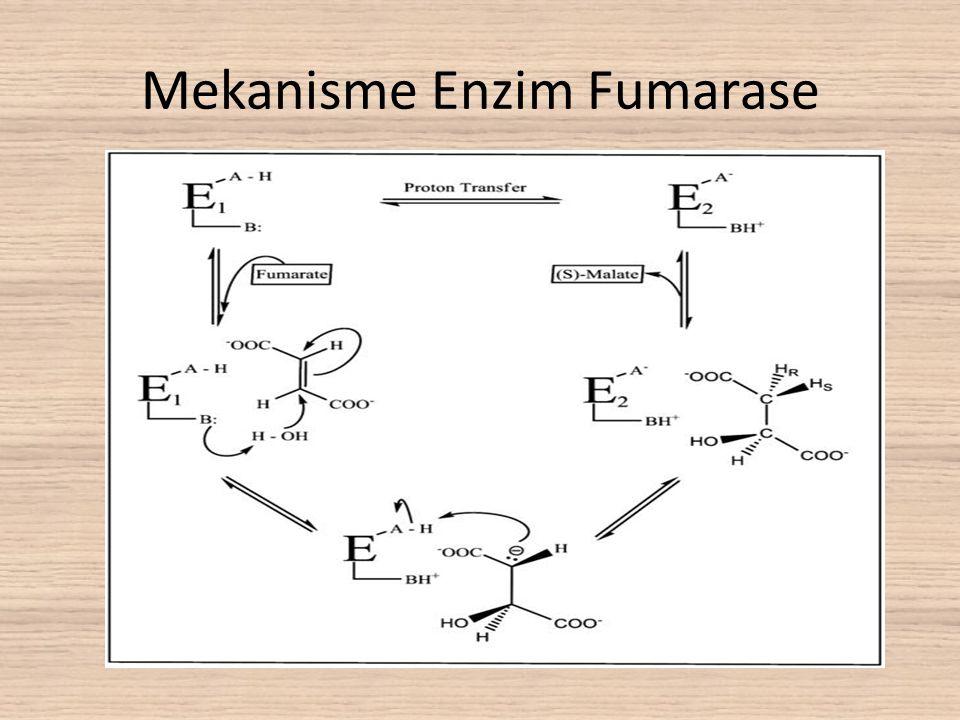Mekanisme Enzim Fumarase