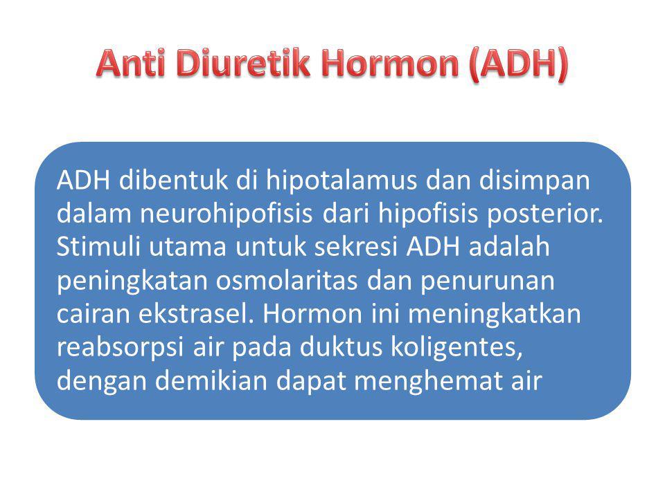 Anti Diuretik Hormon (ADH)