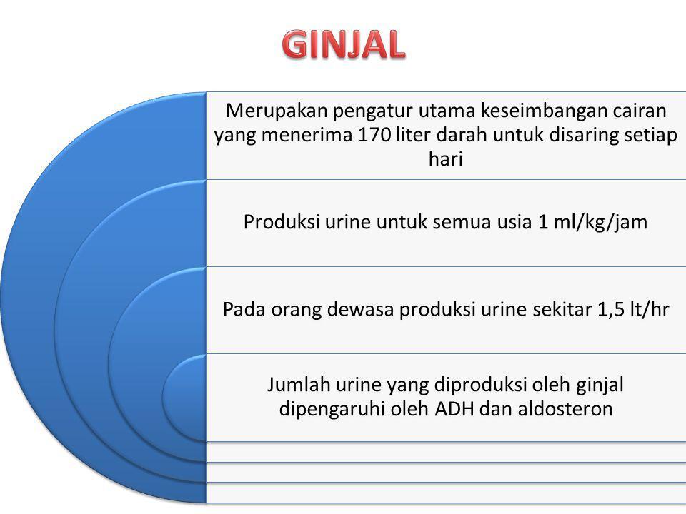 GINJAL Merupakan pengatur utama keseimbangan cairan yang menerima 170 liter darah untuk disaring setiap hari.