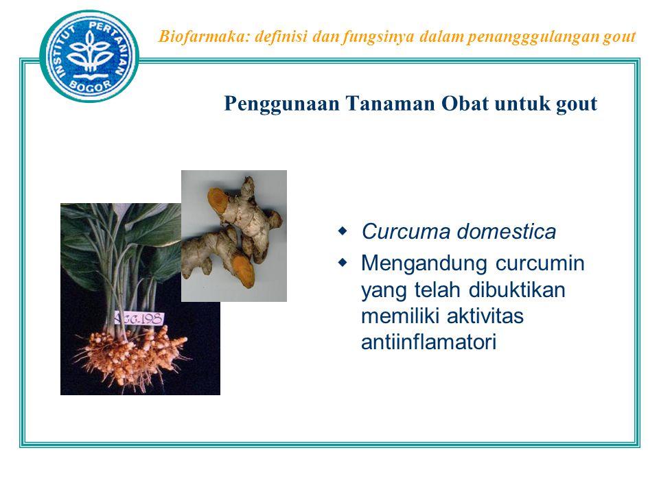 Penggunaan Tanaman Obat untuk gout