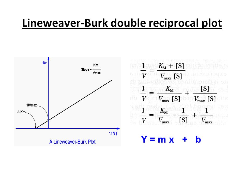 Lineweaver-Burk double reciprocal plot