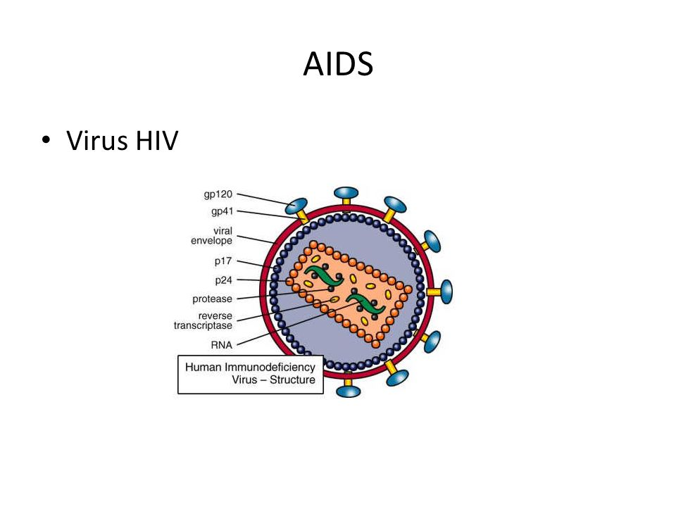 AIDS Virus HIV