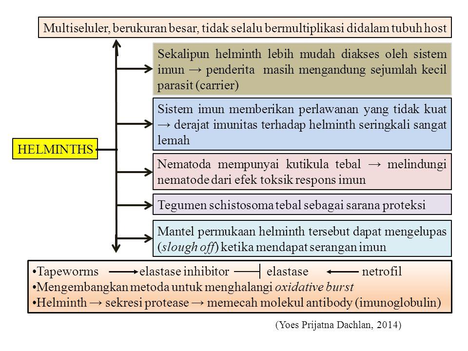 Tegumen schistosoma tebal sebagai sarana proteksi