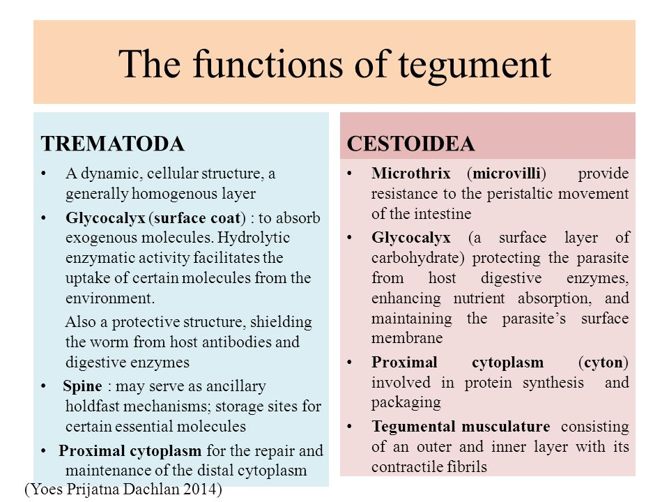 The functions of tegument