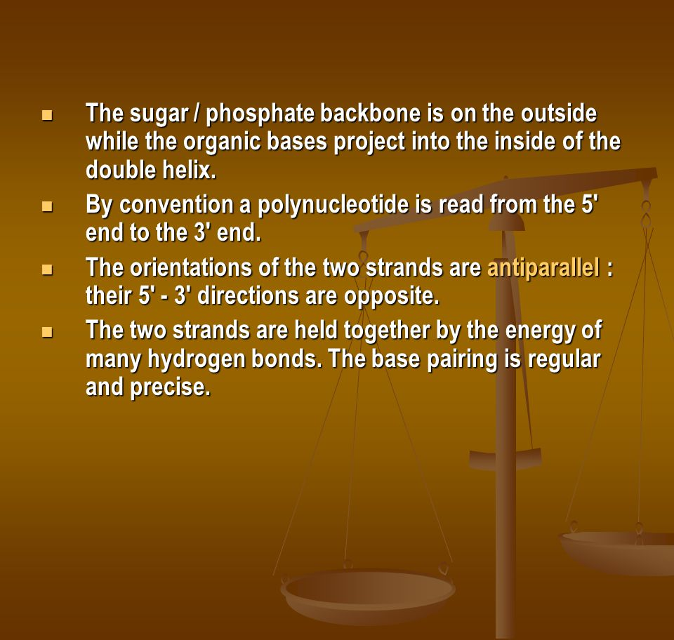 The sugar / phosphate backbone is on the outside while the organic bases project into the inside of the double helix.