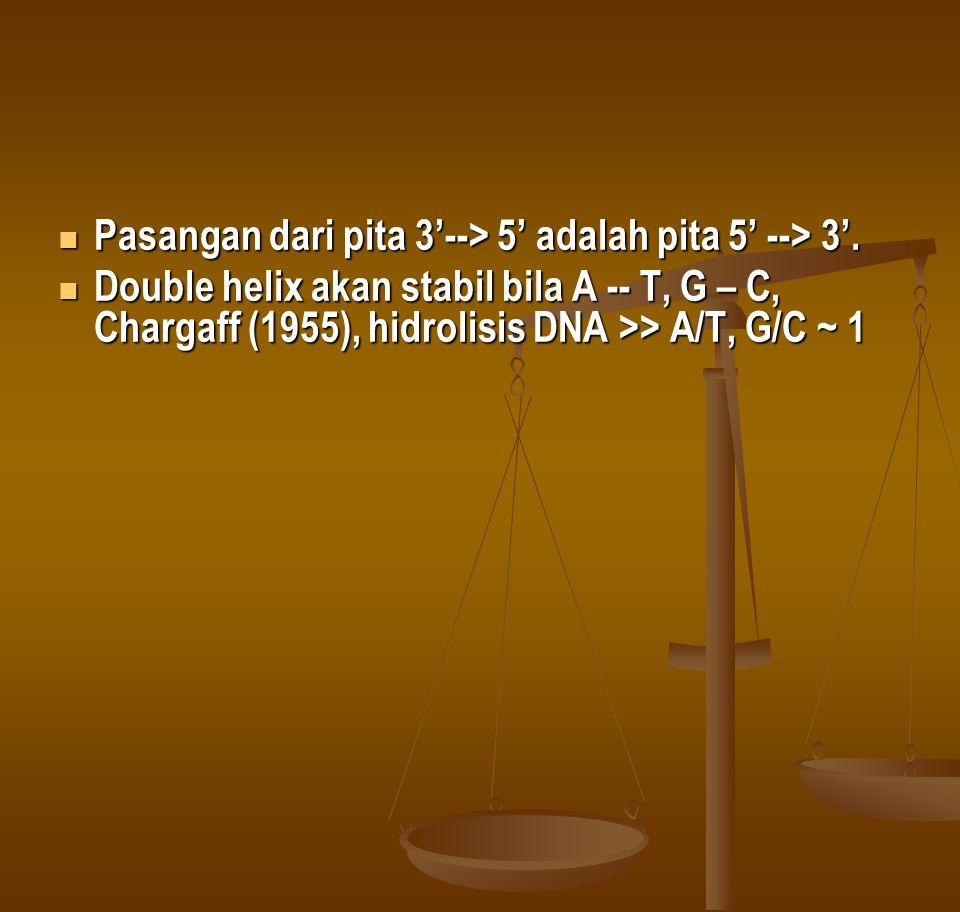 Pasangan dari pita 3'--> 5' adalah pita 5' --> 3'.
