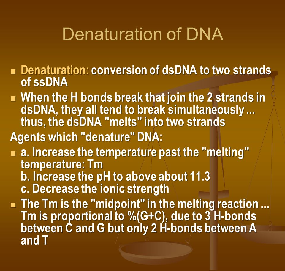 Denaturation of DNA Denaturation: conversion of dsDNA to two strands of ssDNA.