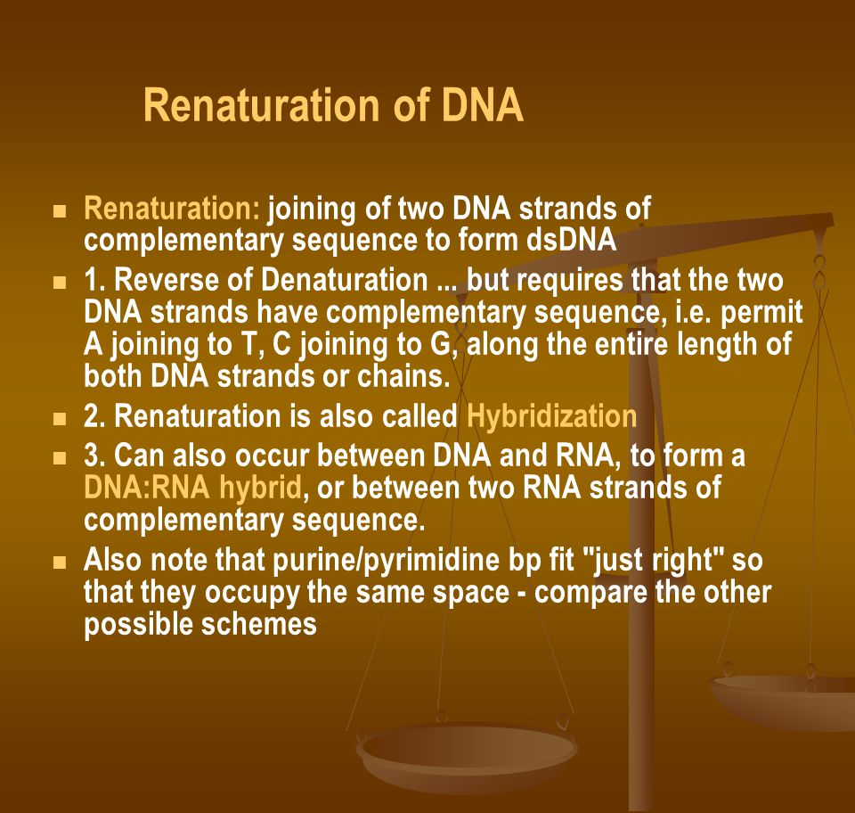 Renaturation of DNA Renaturation: joining of two DNA strands of complementary sequence to form dsDNA.