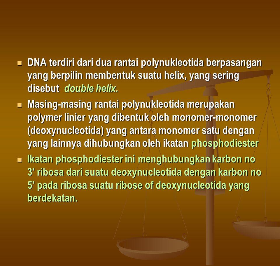 DNA terdiri dari dua rantai polynukleotida berpasangan yang berpilin membentuk suatu helix, yang sering disebut double helix.